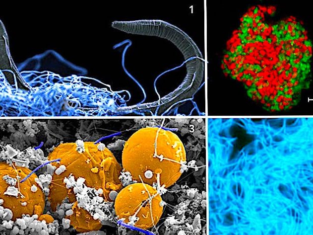 microorganisme-souterrain
