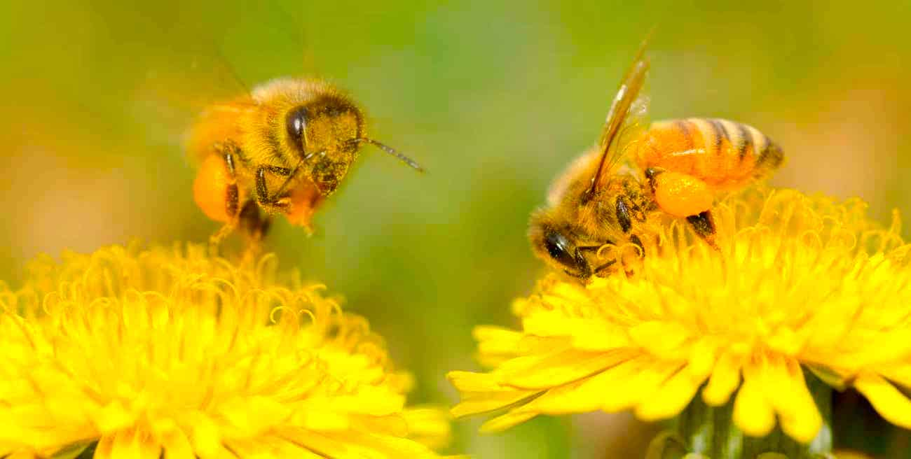 pollinisation insectes vent evolution