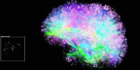 genn spikefun simulation cerebrale informatique cerveau