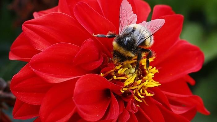 abeille nectar sucre pollen