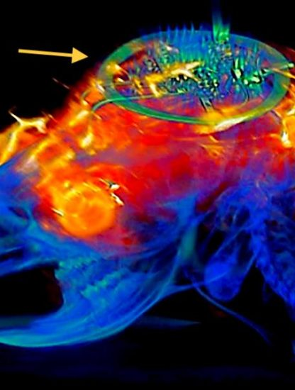 dispositif controle neurones lumiere sans batterie sur animal