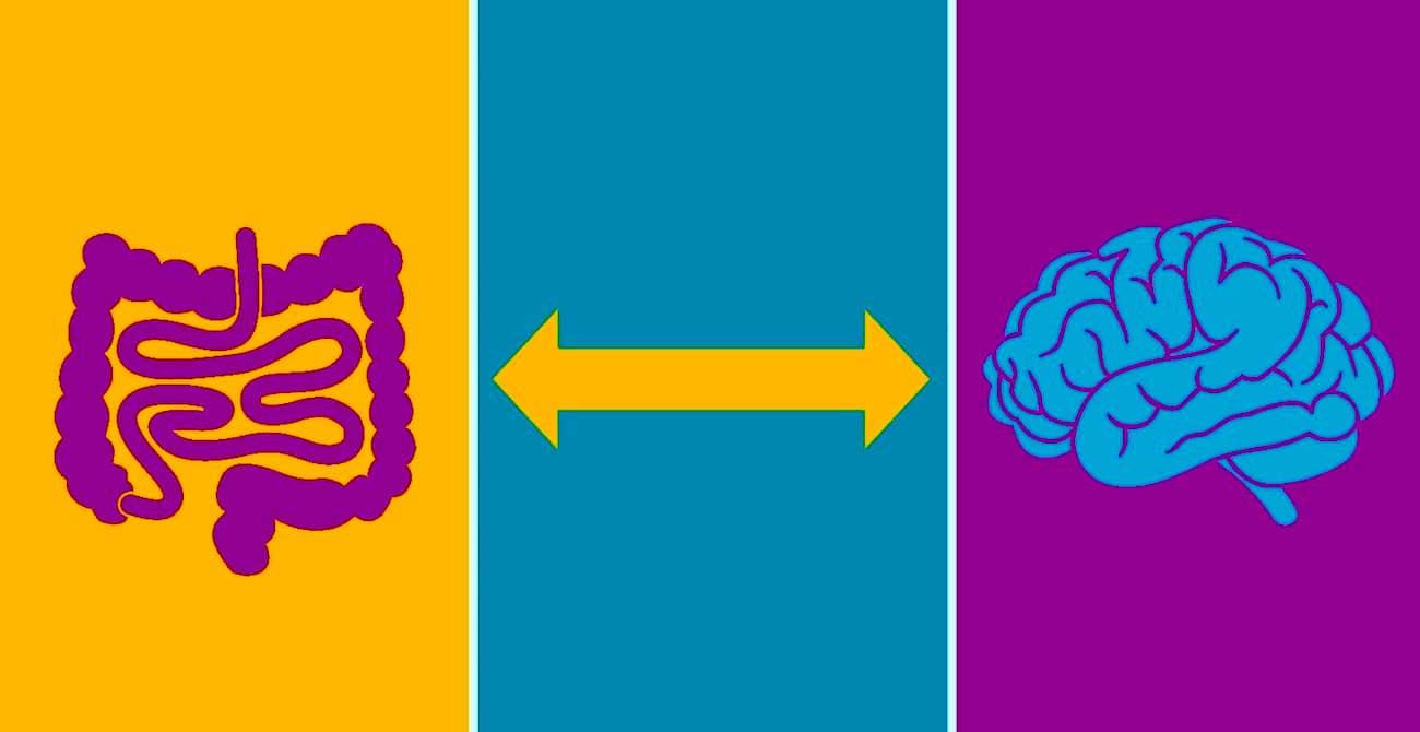 intestin cerveau demence