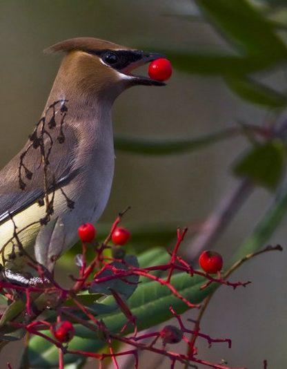 oiseau vision cone oeil yeux violet uv