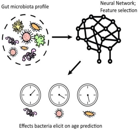 reseau neurones bacteries