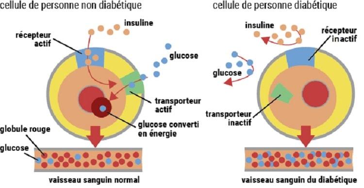 schema insuline glucose