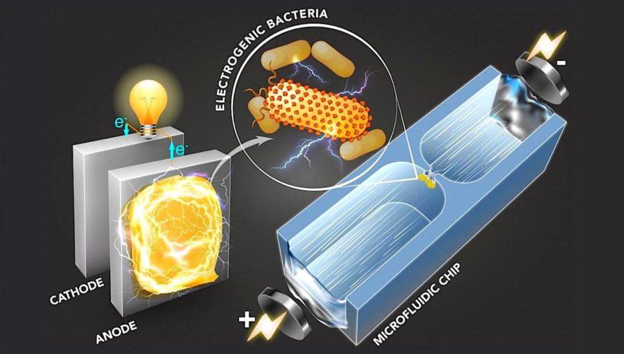 technique identifie bacteries productrices electricite