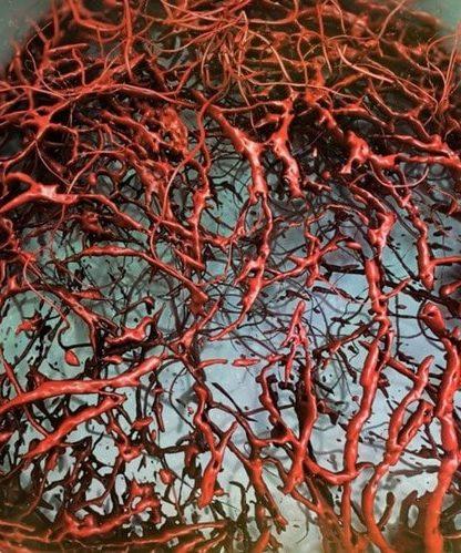 vaisseau sanguin humain laboratoire