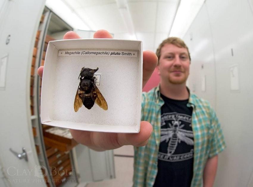 abeille specimen boite