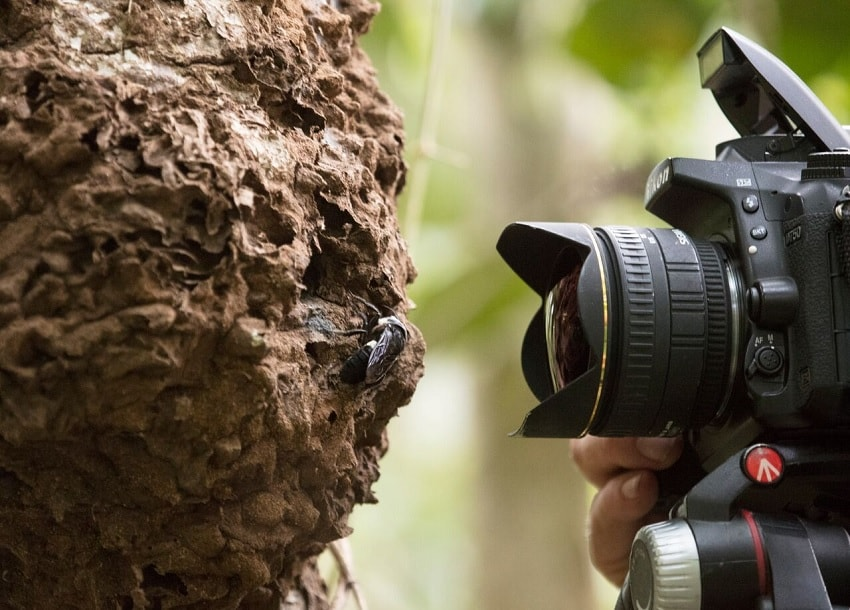 appareil photo abeille