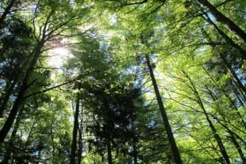 arbre plantation co2 emissions planete pollution homme forets