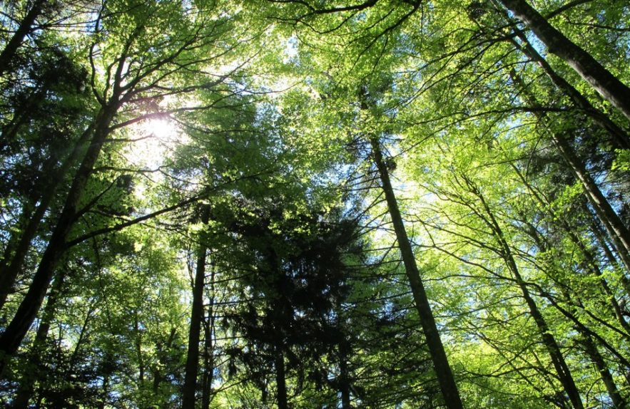 arbre plantation co2 emissions planete pollution homme forets