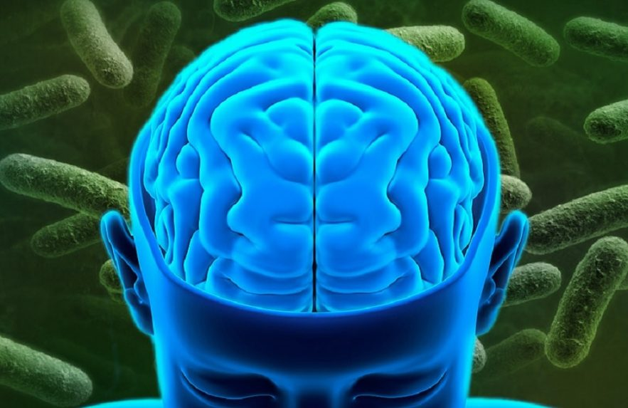 bacterie intestin depression
