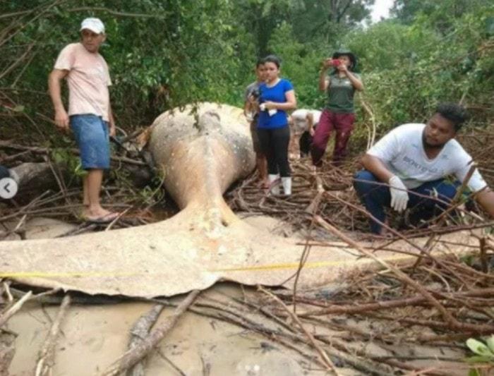 dead whale echo amazon forest amazon river