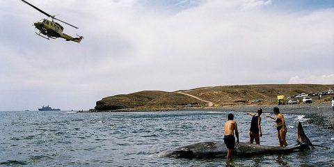 baleine suicide maladie sonar decompression plongeur caisson