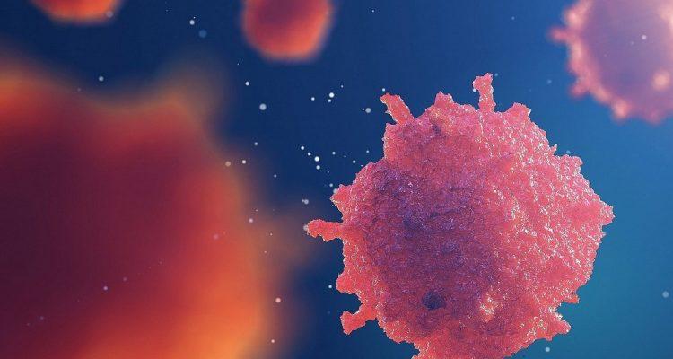 cellules souches pancreas