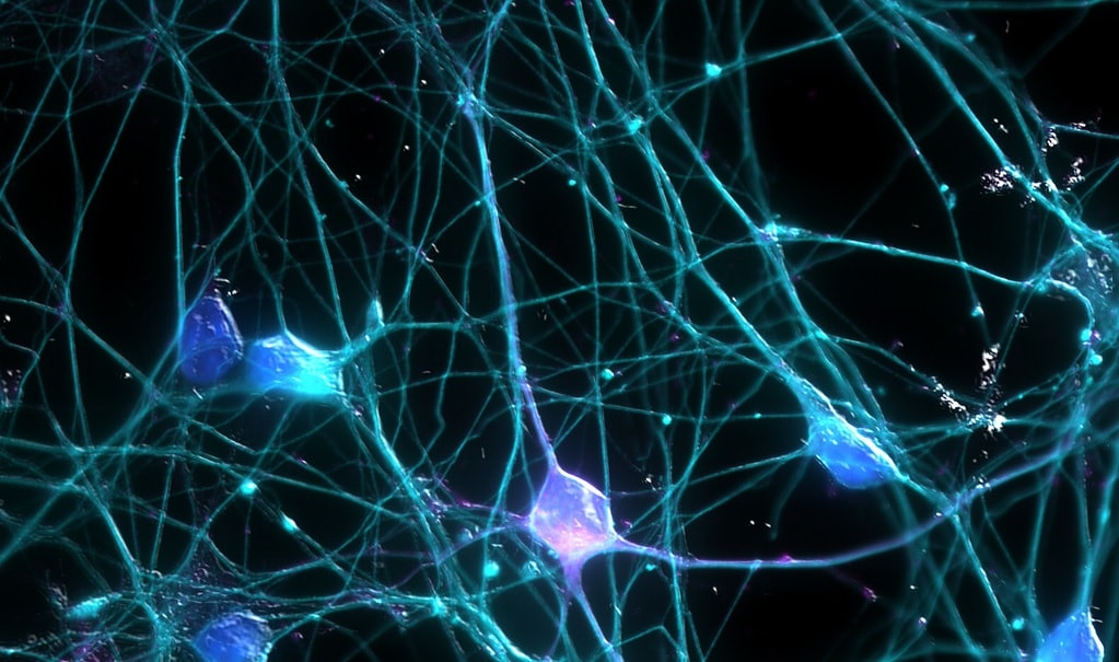 cerveau neurones conscience