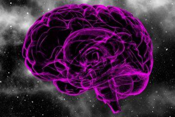 cerveaux de boltzmann