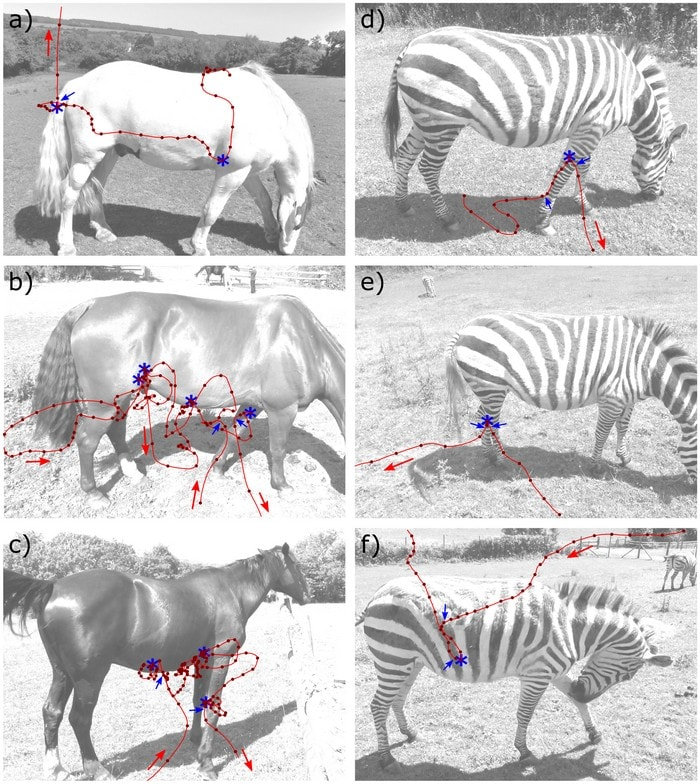 cheveux cheval zebre rayures deguisement mouches trajectoire