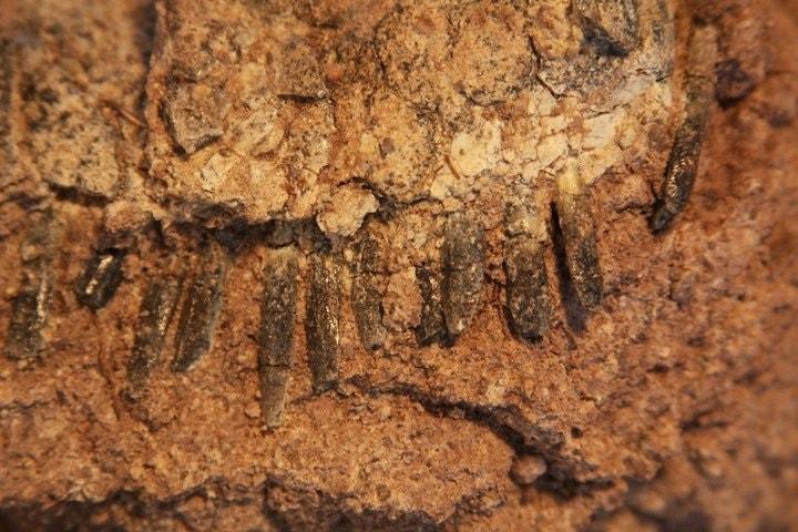 dinosaure machoire dents