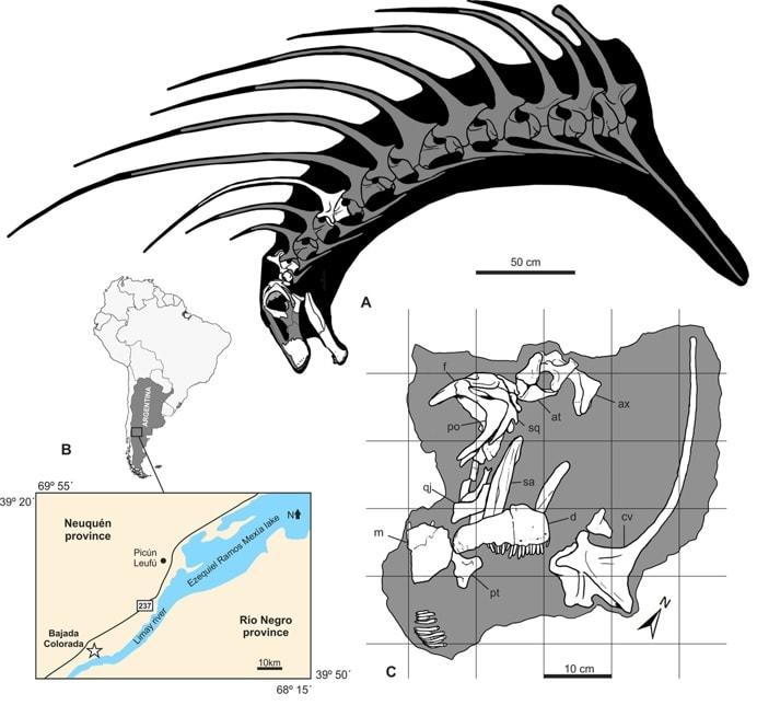 fragments squelette bajadasaurus