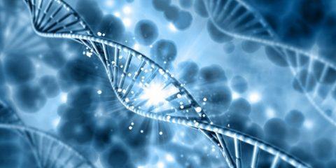 genetique fond patrimoine gene cellule levure etre humain maladie recherche