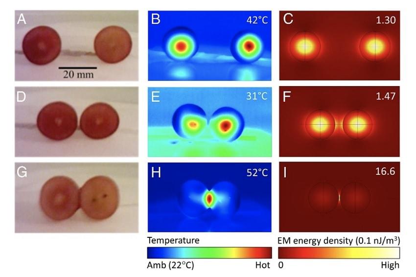 image thermique raisins