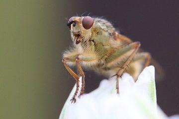 insecte extinction disparition impact homme terre planete ecosysteme destruction