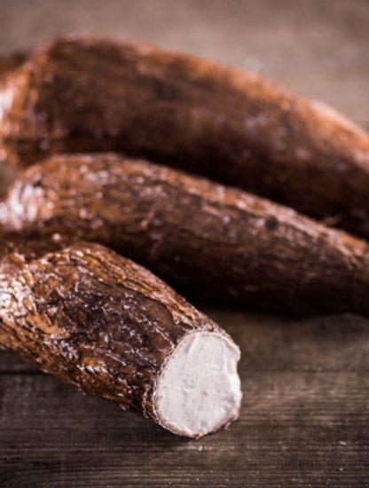 manioc genetiquement modifie ogm