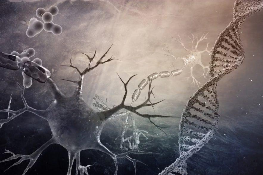 neurones maladies alzheimer