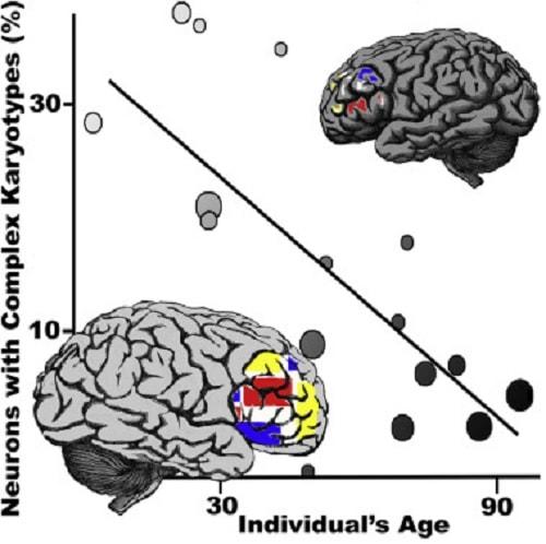 neurones mosaicisme age