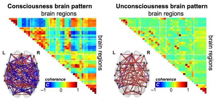 schemas cerebraux conscience