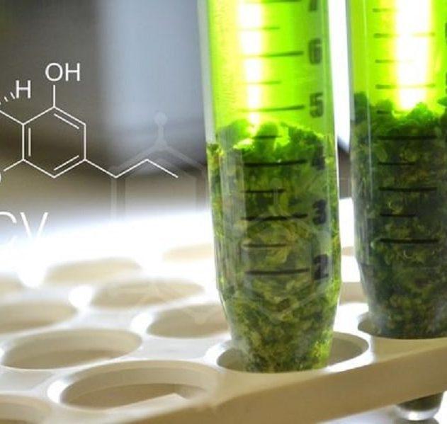 synthese artificielle cannabinoides