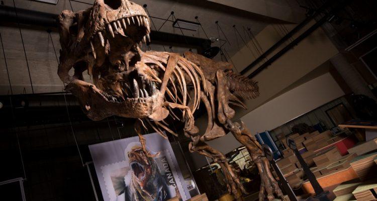 trex dinosaure tyrannosaurus rex