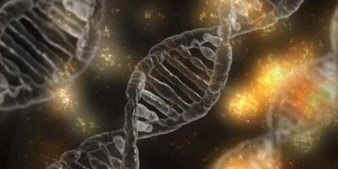 adn mutation genetique filmee video