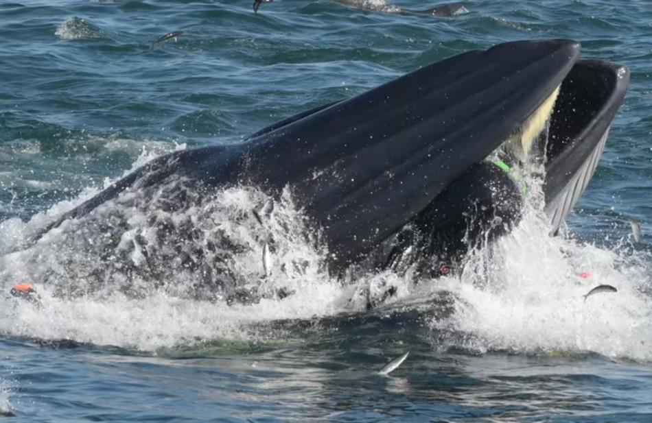 plongeur baleine bateau