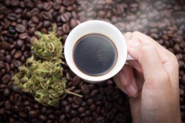 cafe endocannabinoides sante effet metabolite metabolisme