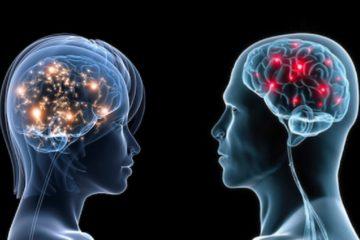cerveaux homme femme