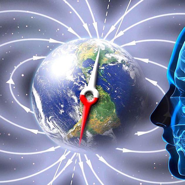 champ magnetique terrestre terre etre humain sens sensoriel