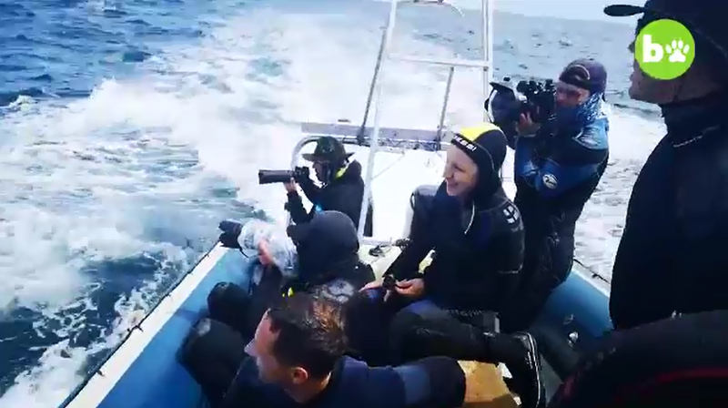 baleine bateau plongeur