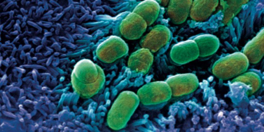 microbiome bacteries intestins cerveau maladies mentales antibiotiques