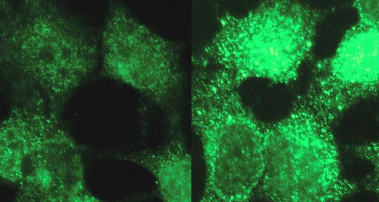 modele identification maladie