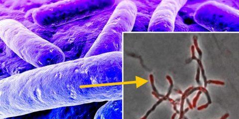 nouvelles sondes chimiques progression recherche nouveaux antibiotiques