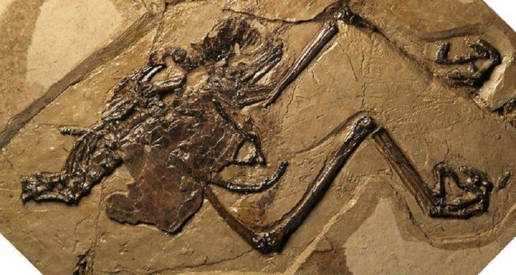 oiseau oeuf fossile