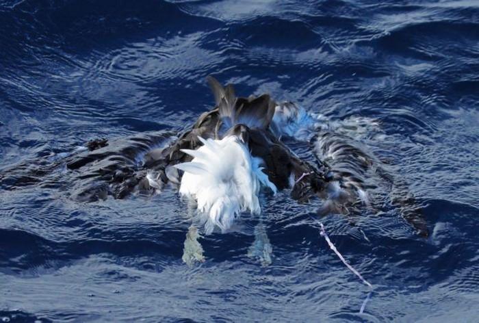 plastique oiseau mer mort pollution déchets ballon