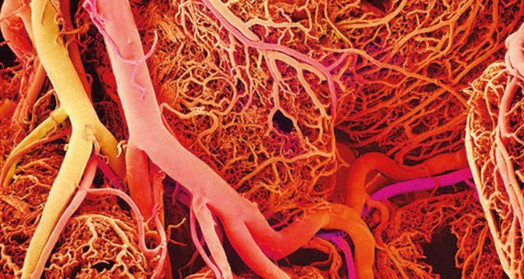 vaisseau sanguin sang
