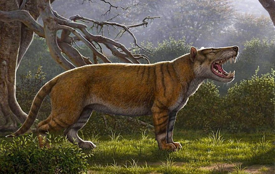 simbakubwa lion geant decouvert kenya
