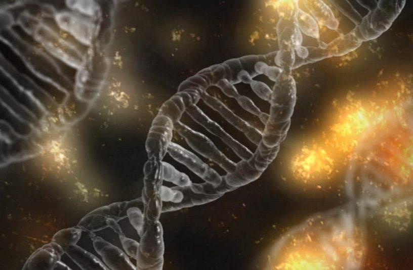 crispr modification genetique