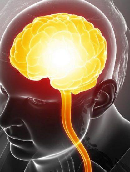 cerveau diminution matiere grise blanche obesite lien masse graisseuse graisse