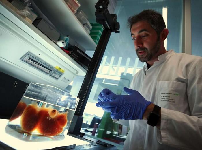cerveau transparence organes tissus humains organiques vivants