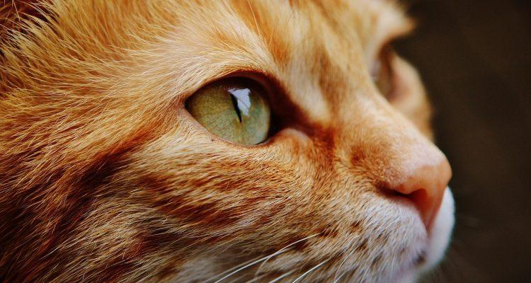 Les chats connaissent bien leur nom, c'est prouvé scientifiquement !